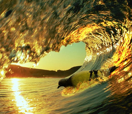 Golden Surf