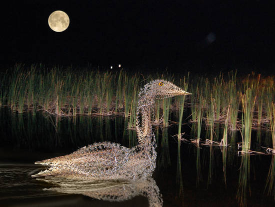 Everglades Bird At Night
