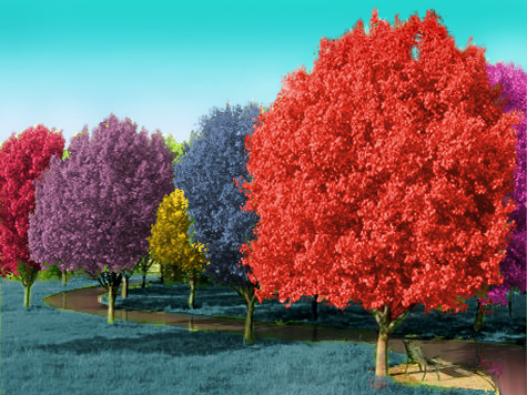 Photoshop Contests Win Real Prizes Photoshop Tutorials Color Trees