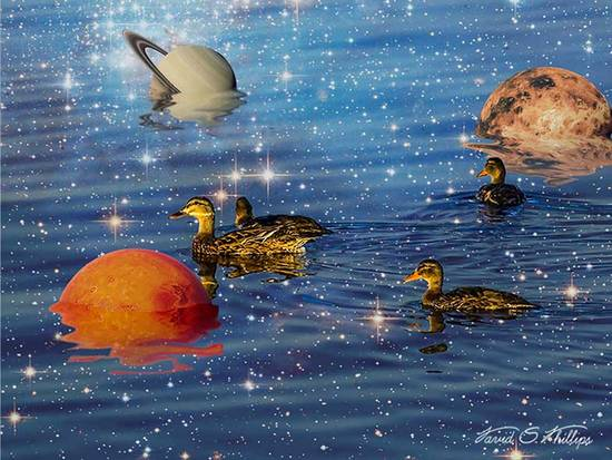 Ducks Liquid Space