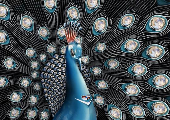 Chrome Peacock