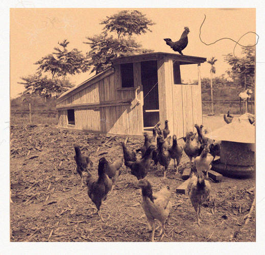 Old Chicken Farm Photo