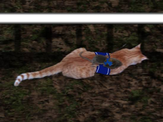 Kitty Racing