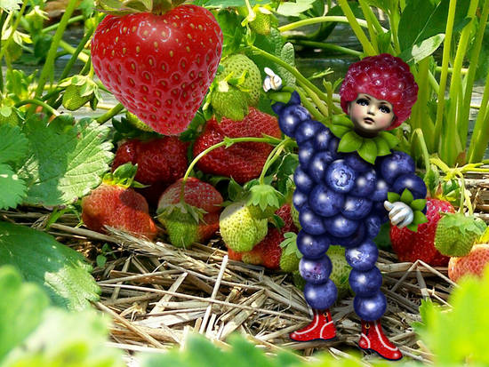 Berry Boy