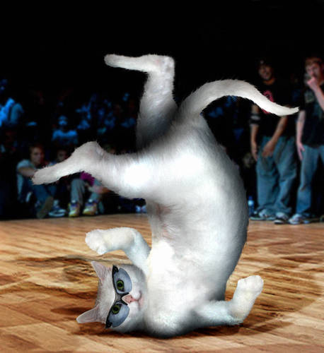Breakdancing Puss...