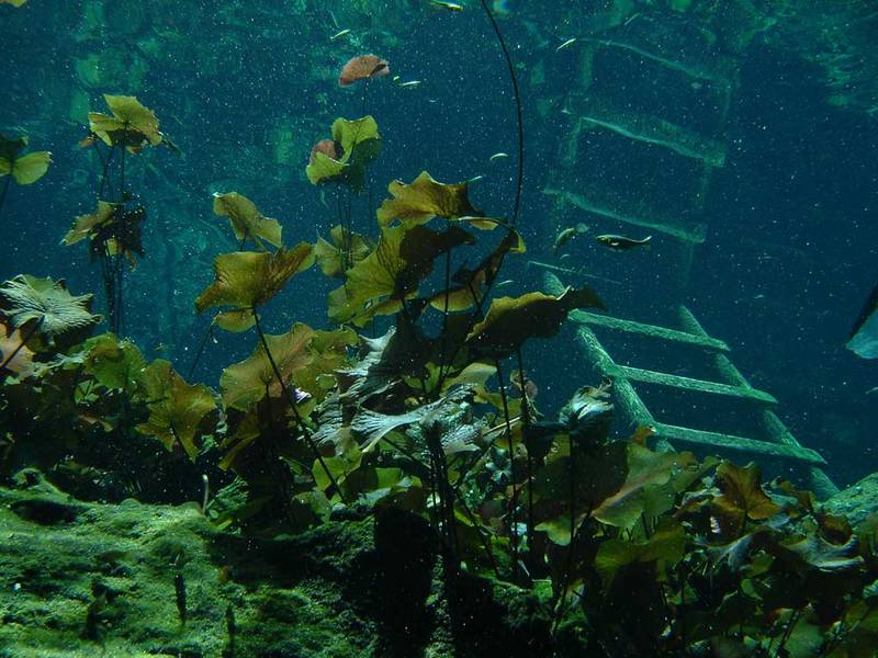Here is why i can t have live aquatic plants in my turtle for Underwater pond plants