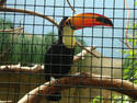 Caged Toucan, 12 entries