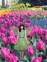 Fairy in tulip fields