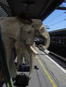 elephant commute